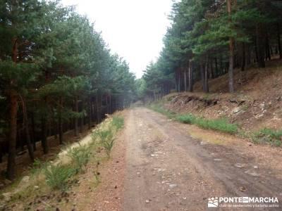 Carro del Diablo - Valle del Lozoya; arbol de la vida celta cercanias san sebastian el real de san v